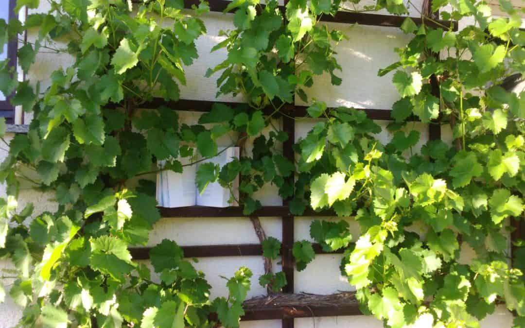 Der Weinstock und Outdoor Journaling